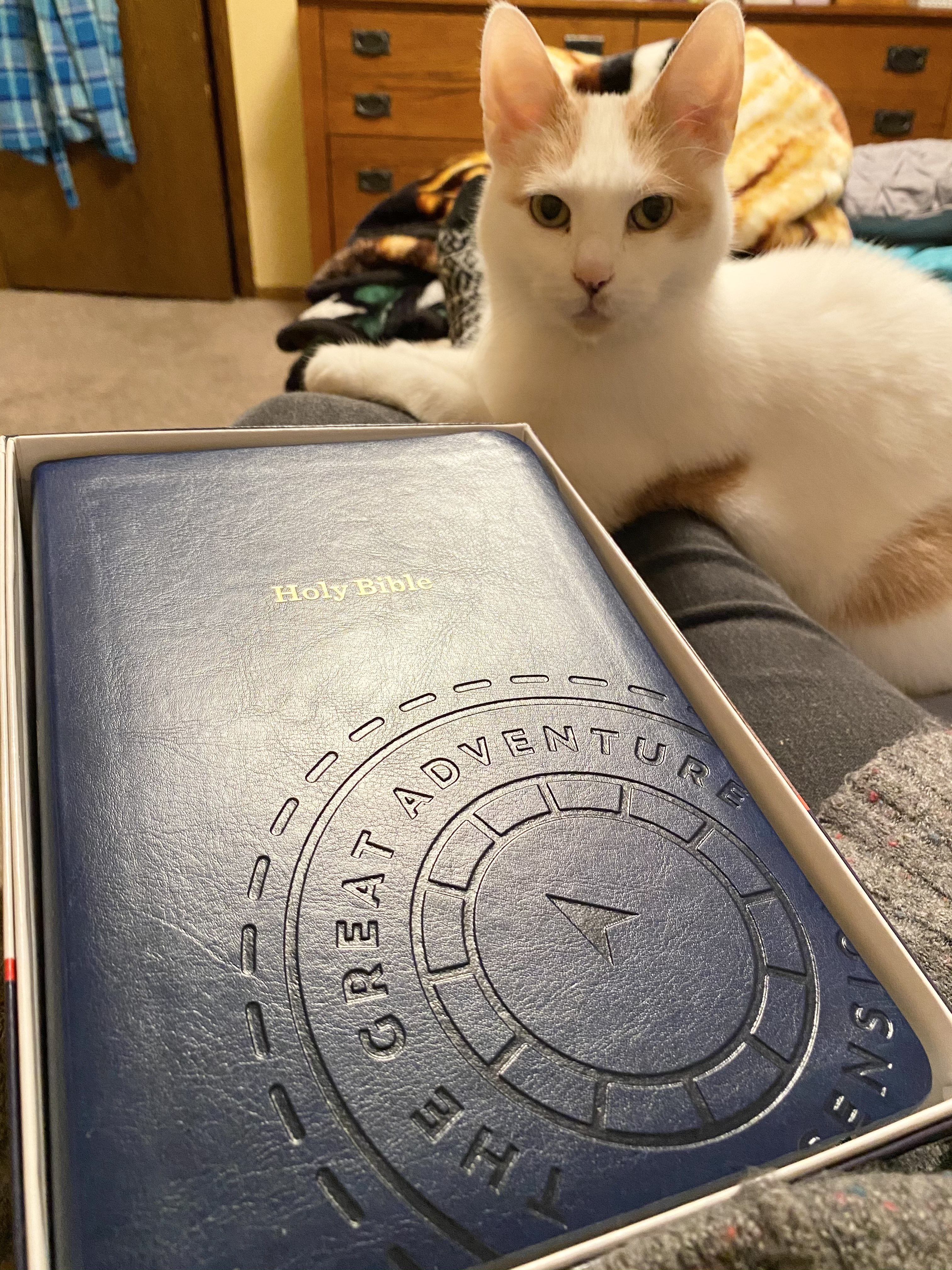 Great Adventure Bible in box, white cat looking