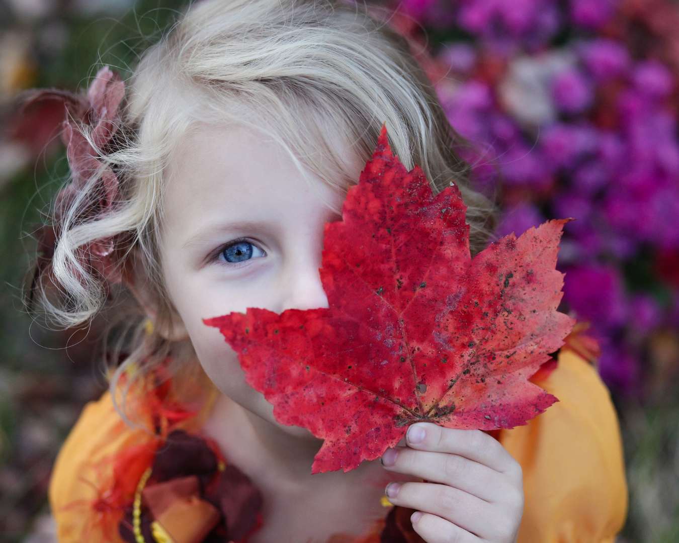 girl with blue eyes peeking out from behind large red maple leaf