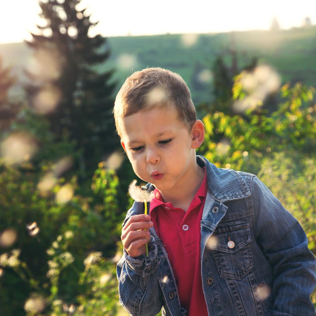little boy blowing dandelion seeds