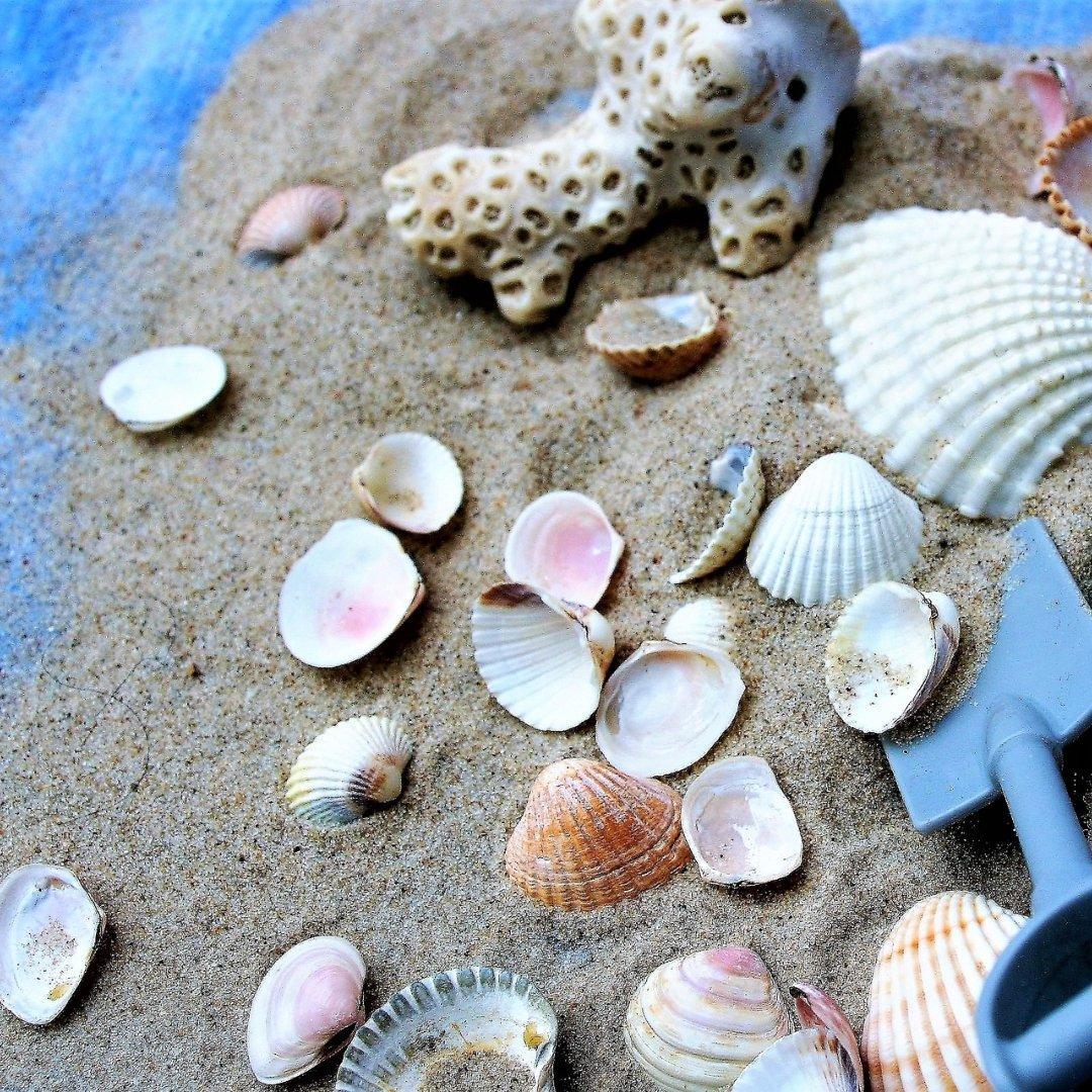 seashells, sand, and shovel