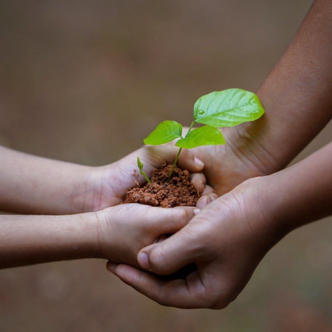 small child handing uprooted plant to adult