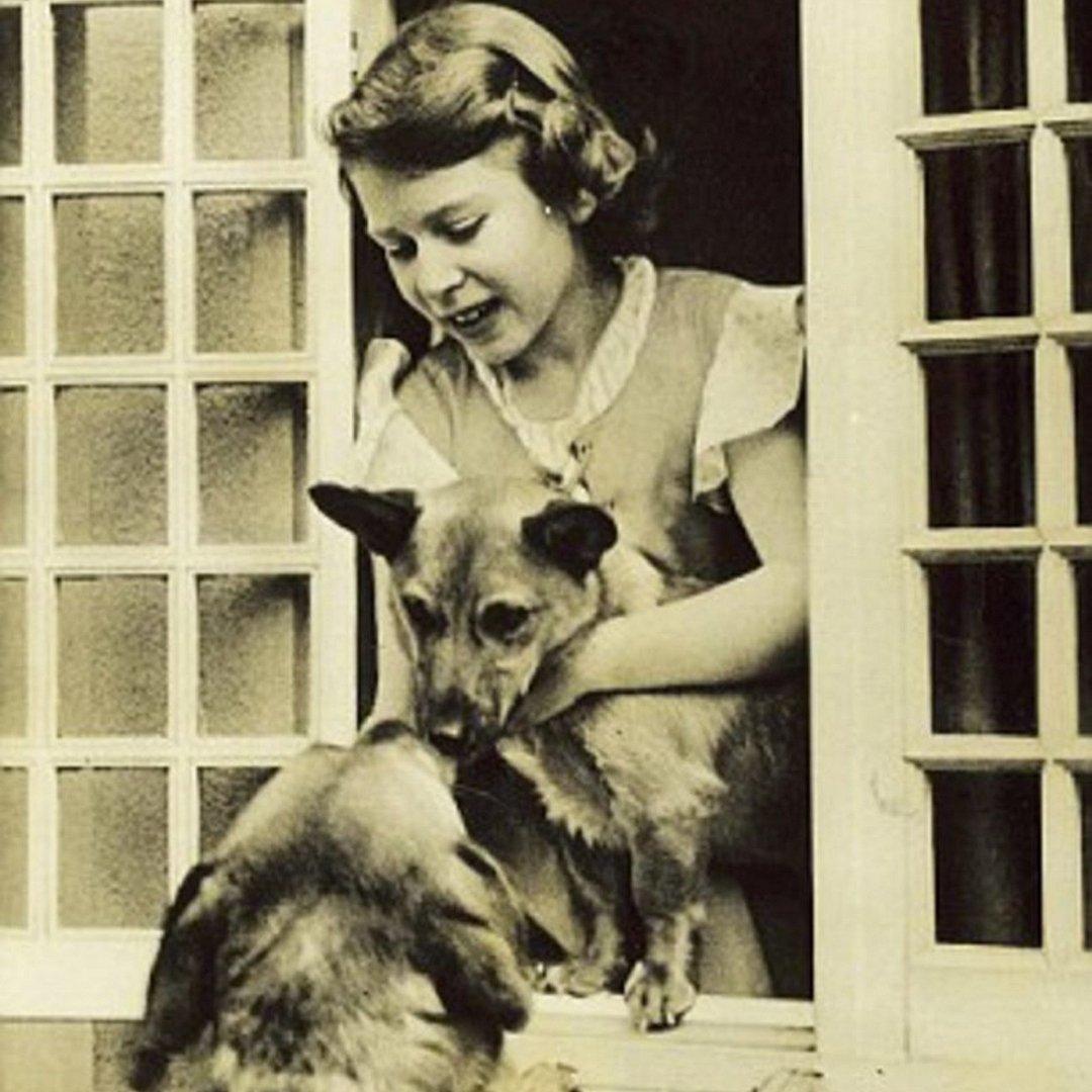 Queen Elizabeth (1036) with dogs