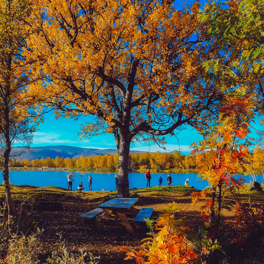 autumn view of trees and a lake with picnic table in foreground