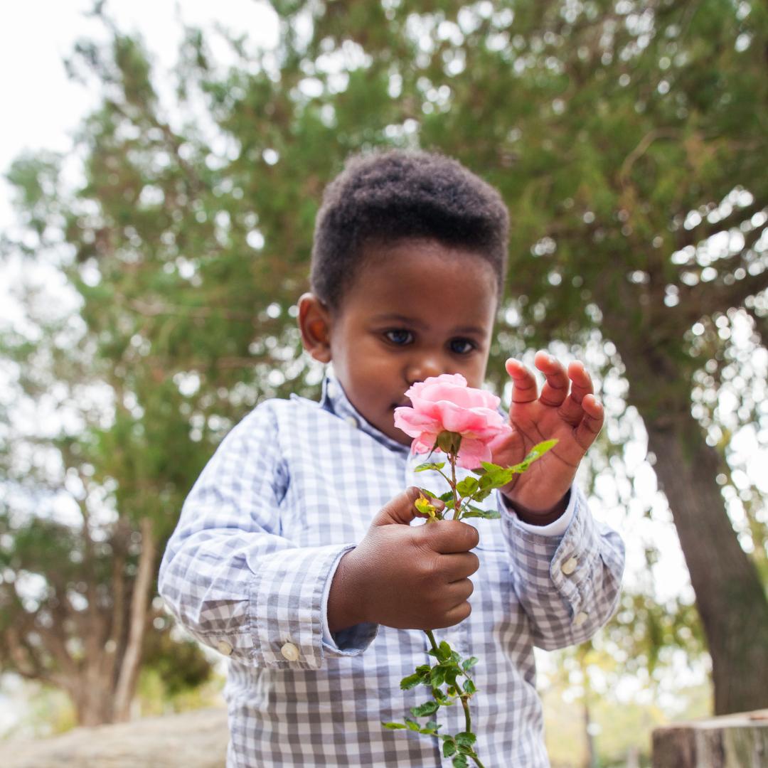 little boy holding a pink rose
