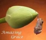 AmazingGrace220