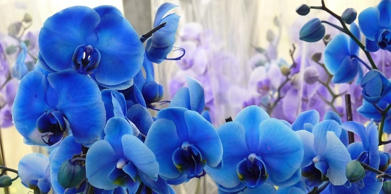 """""""Blue-dyed orchids and dying to self"""" by Margaret Rose Realy, Obl. OSB (CatholicMom.com)"""