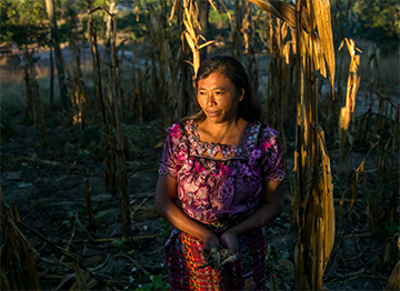Cristina Garcia and her family live in Guatemala's Dry Corridor, where rainfall fluctuation and climate change have drastically reduced crop yields. Photo by Phil Laubner/CRS