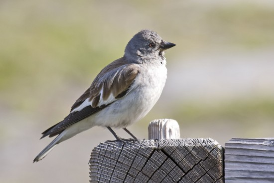 """""""Her Eye is on the Sparrow"""" for CatholicMom.com by Jessica Ptomey"""
