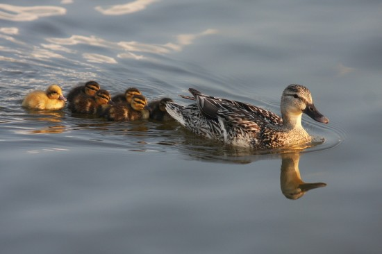 What First Communion Class and Ducklings Have in Common