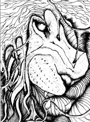Illustrations by Ana Maria Rocha