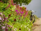 bike-with-flowers-762217-m