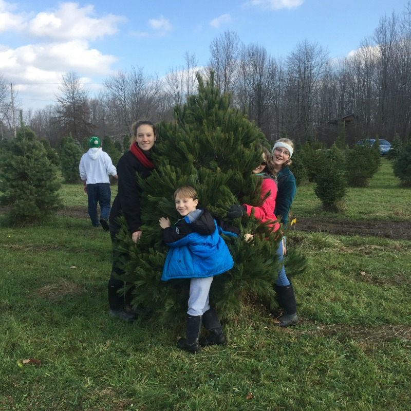 """Be a tree-hugger this Christmas"" by Christina Nagy (CatholicMom.com)"