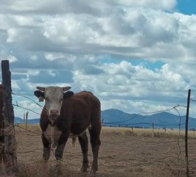 A New Mexico Scene