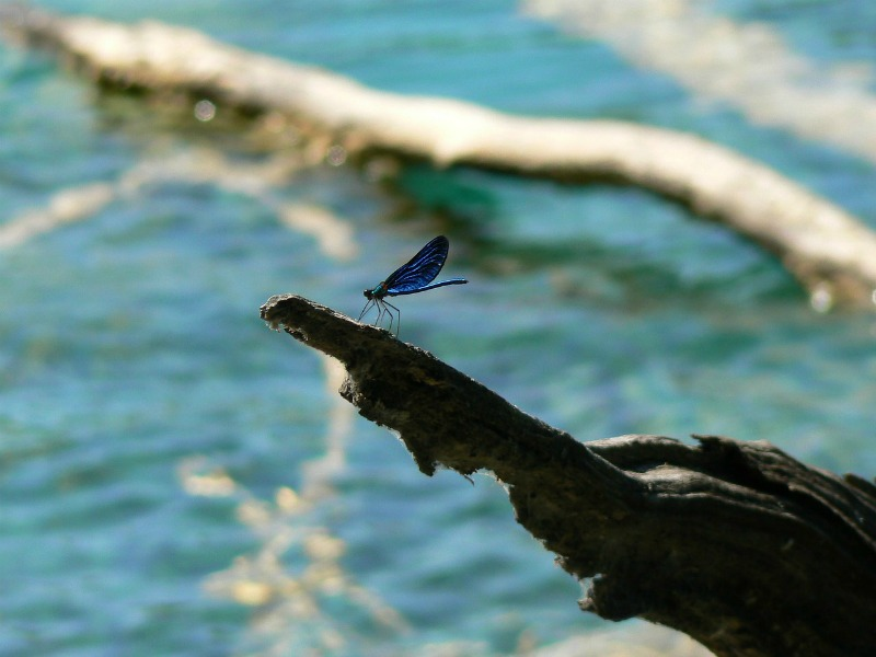 """""""Following solitude"""" by Margaret Rose Realy, Obl. OSB (CatholicMom.com)"""