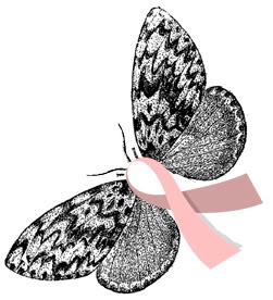 lh_moth