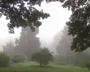 lori_hd_fog