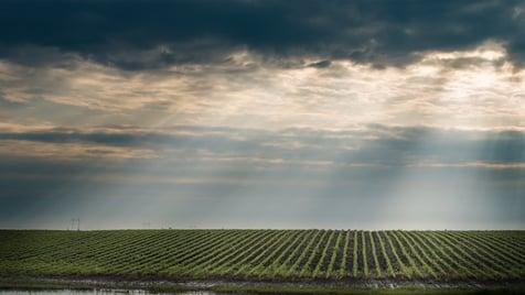 Rain on soybean field Dollarphotoclub 65810953