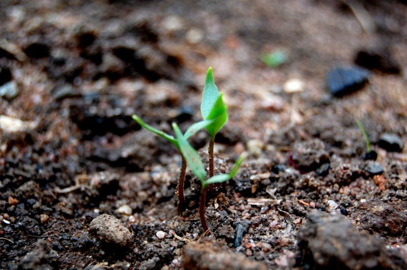 """""""The Sower and His Seed"""" by Kimberly Nettuno (CatholicMom.com)"""