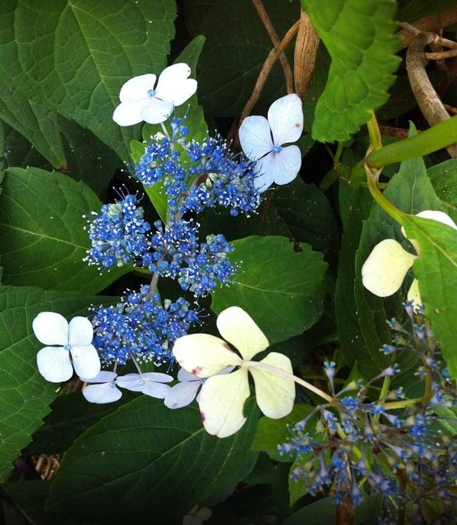 st luke's flower1