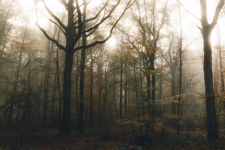 beauty of barrenness -dblack 0107
