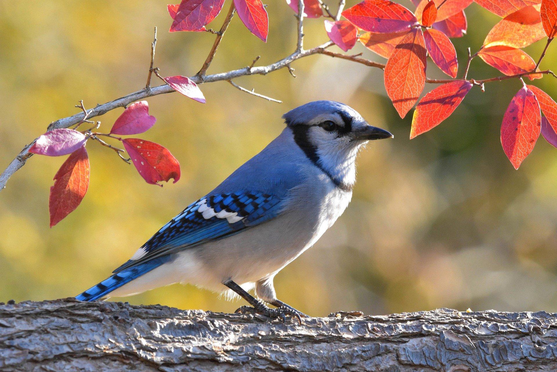 bird-5685953_1920