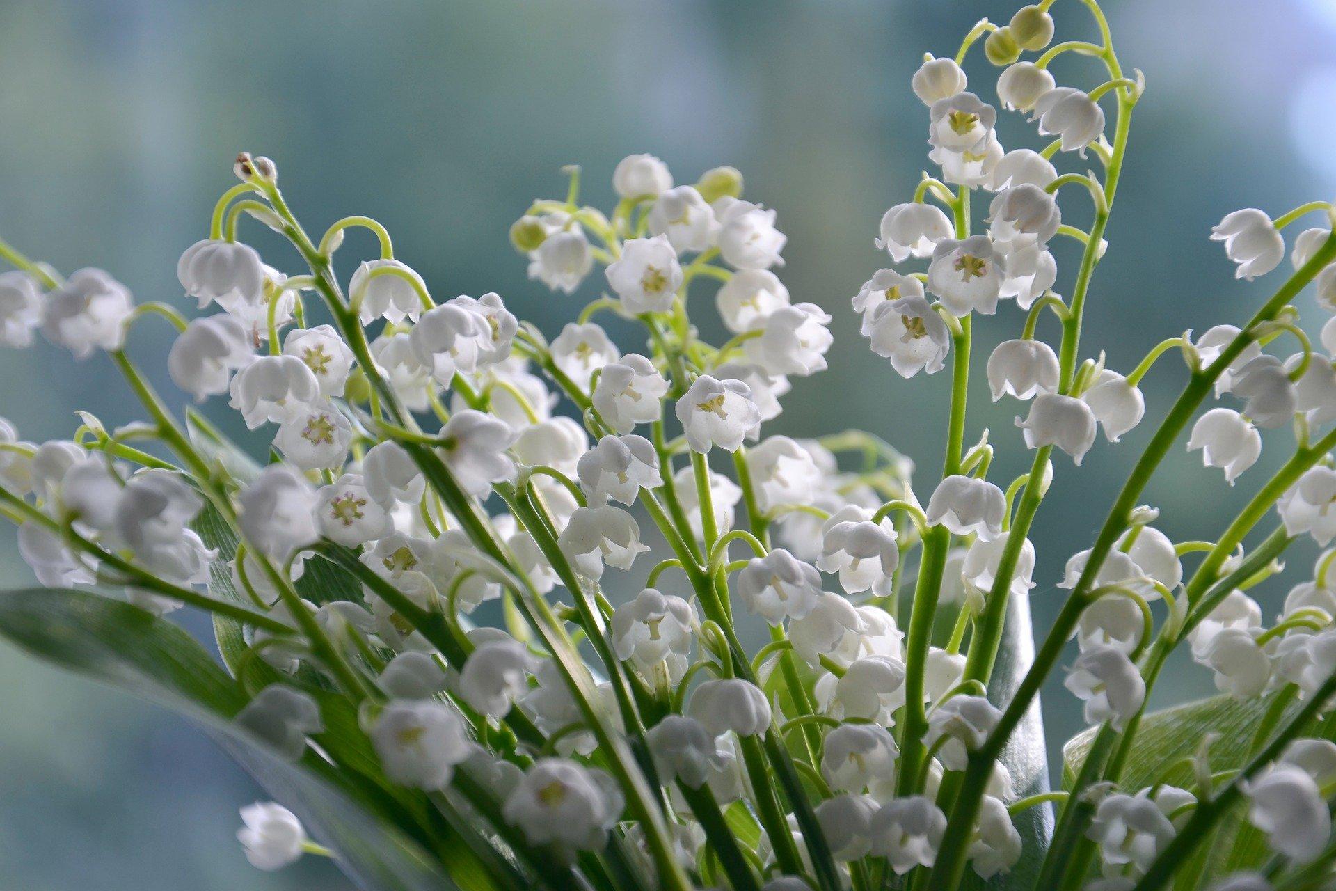 flowers-4240129_1920