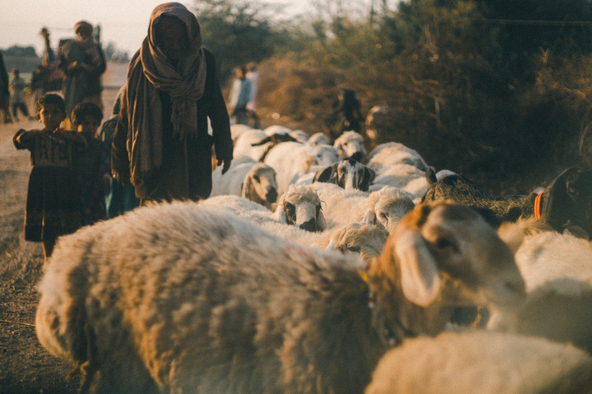 journey with the shepherds-ereardon-1224